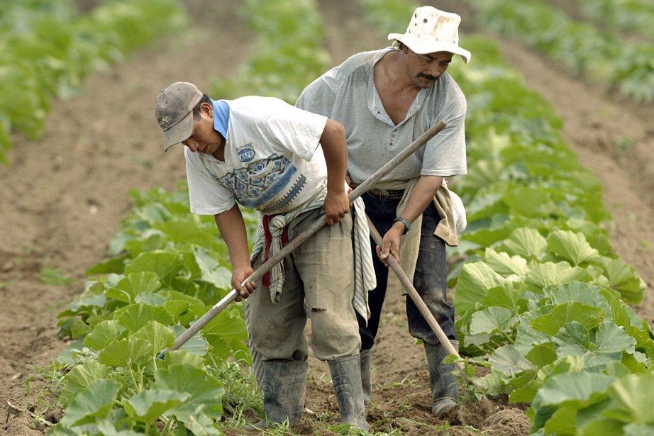 Le Québec accueille plusieurs travailleurs mexicains et ... (Photo: Martin Chamberland, archives La Presse)