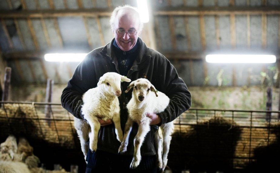 À Heeze-Leende, aux Pays-Bas, au moins 40 agneaux sont nés dans les derniers jours, signe avant-coureur du printemps. | 21 février 2013
