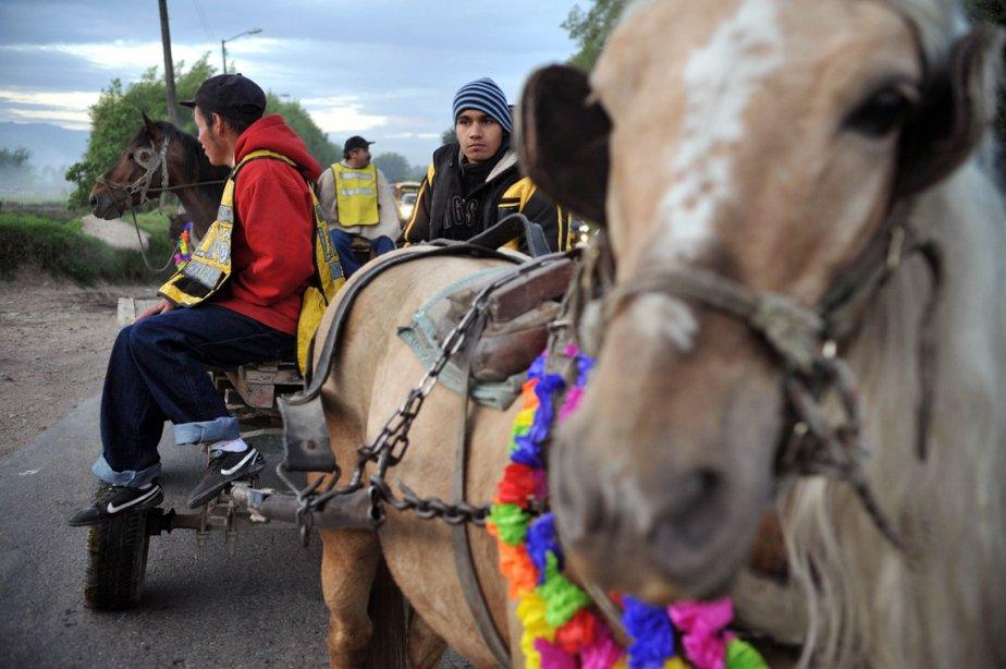 Quelque 50 recycleurs en caravane vers l'Université des sciences appliquées et de l'environnement de Bogota, en  Colombie, où leurs chevaux recevront des soins vétérinaires et attendront d'être adoptés. Ce geste s'inscrit dans un processus visant à les convertir au transport automobile, une initiative du maire de Bogota, du Secrétariat des transports et des associations de défense des animaux. | 27 février 2013