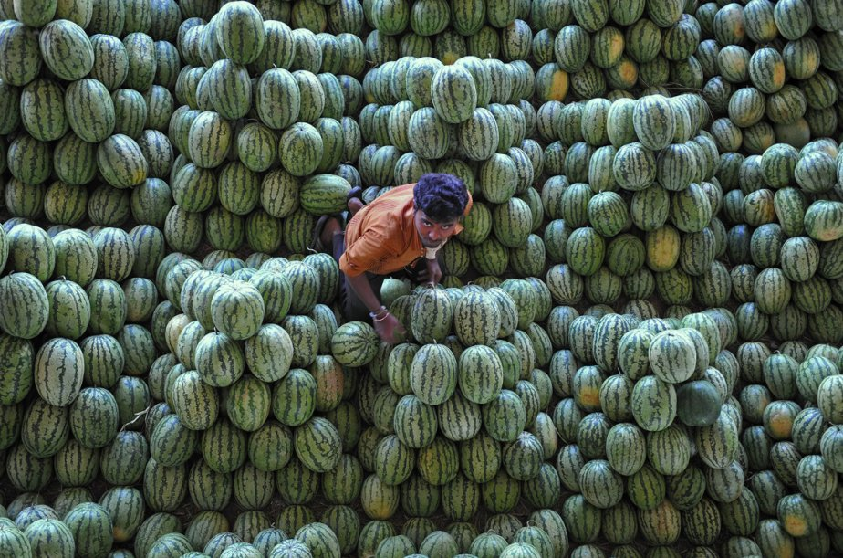 Un travailleur indien trie des melons d'eau au marché de Gaddiannaram, à Hyderabad. Le gouvernement de l'Inde a annoncé une enveloppe de  1,9 milliards de dollars pour un programme destiné à combattre la malnutrition, une mesure vue comme une manoeuvre électoraliste du parti du Congrès en vue des élections de l'an prochain. | 1 mars 2013