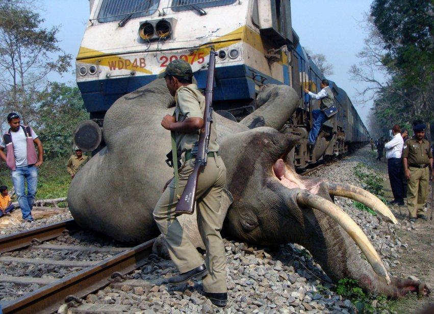 Un éléphant est mort après avoir été heurté par un train proche de Alipurduar, en Inde. | 6 mars 2013