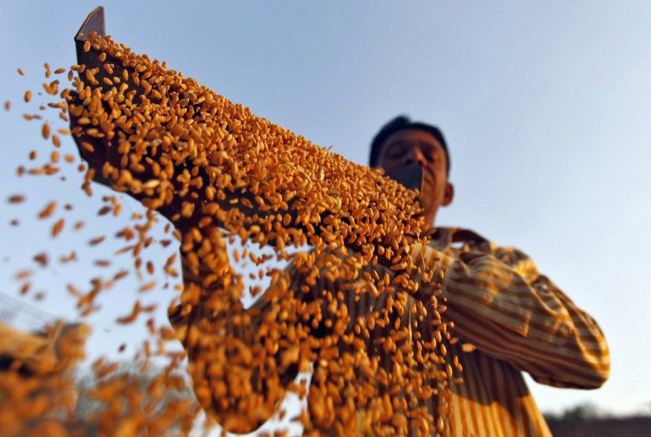 Un agriculteur passe au crible sa récolte de blé dans... | 2013-03-07 00:00:00.000