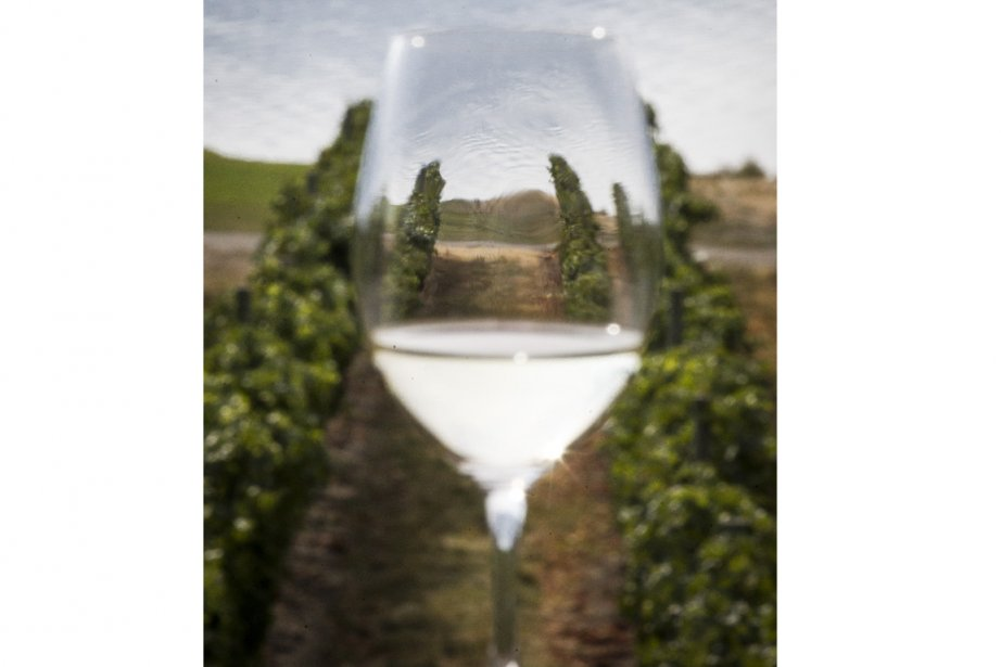 Les vignerons de l'Ontario, de la... (Photo Olivier Pontbriand, La Presse)