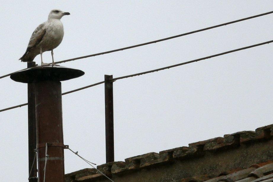 Une mouette perchée sur la célèbre cheminée de... (Photo: Reuters)