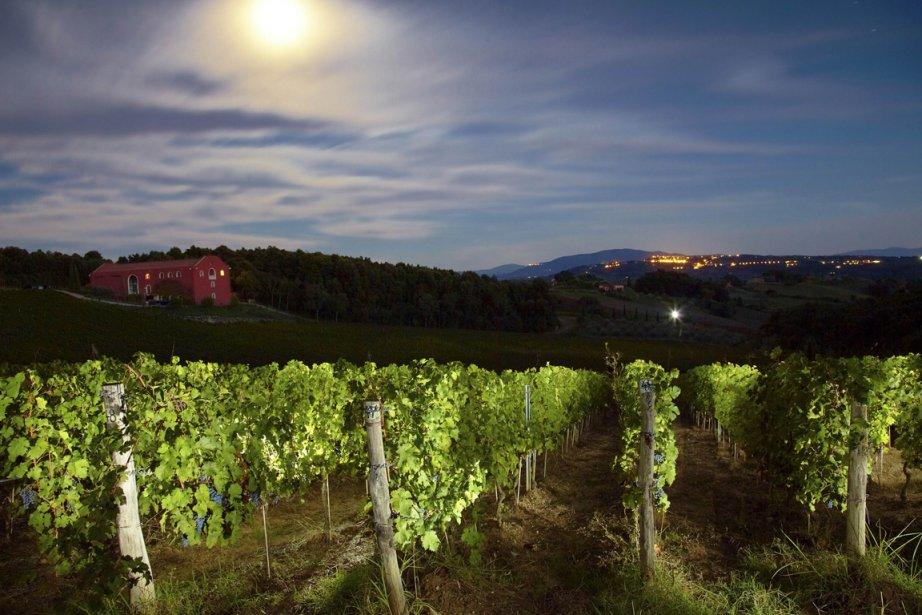 Le vin fascine... pour plusieurs raisons. Son évolution et donc sa... (Photo AFP)