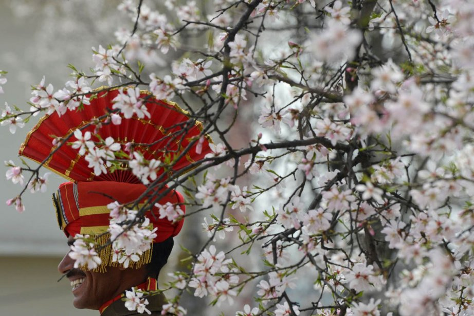 Un soldat des forces de sécurité frontalière indienne derrière un arbre en fleurs à Srinagar. | 22 mars 2013