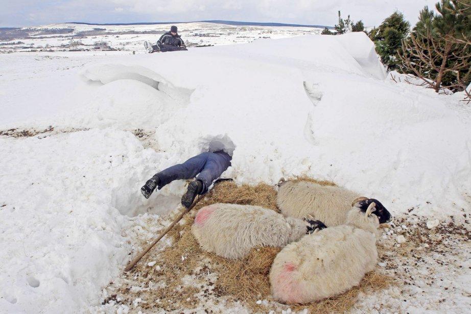 Un fermier plonge dans un trou qu'il a... (PHOTO CATHAL MCNAUGHTON, REUTERS)