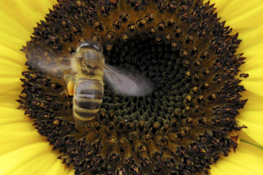 La semaine dernière plusieurs apiculteurs et des groupes... (PHOTO MIKE BLAKE, REUTERS)
