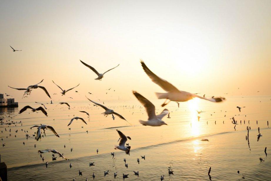 En Louisiane, la subsistance d'espèces sauvages d'oiseaux a... (Photo TOM RUETHAI/Shutterstock.com)