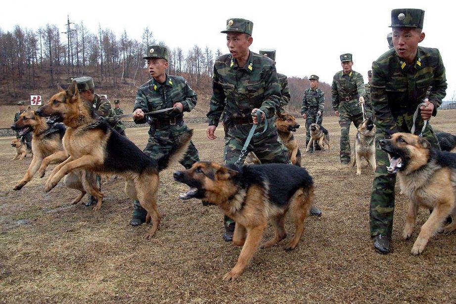 Des militaires s'entraînent avec des chiens dressés, en... (Photo: AFP/KCNA via KNS)
