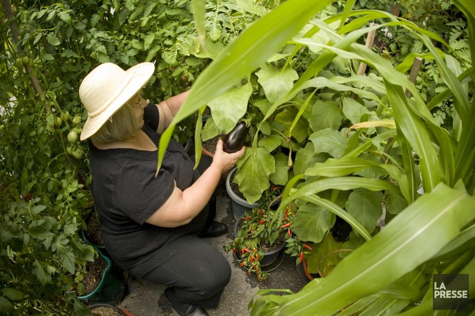 R ussir son potager urbain en cinq tapes jardiner - Creer un jardin potager ...