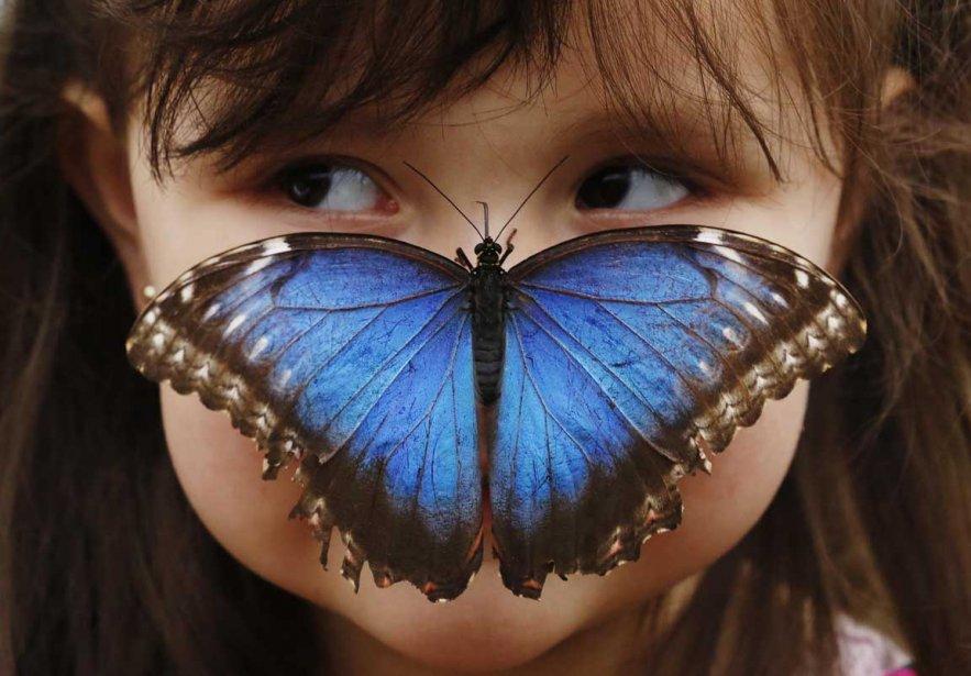 Un papillon se pose sur le nez de Stella Ferruzola, 3 ans, au musée d'histoire naturelle de Londres | 8 avril 2013