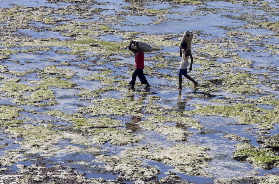 Des pêcheurs de fruits de mer avec leurs prises. | 10 avril 2013