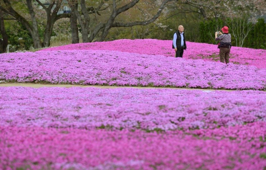 Un jardin de Tatebayashi au nord de Tokyo | 12 avril 2013