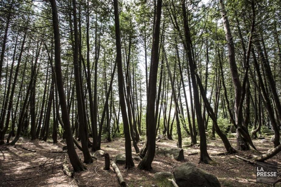 Le Jour de la Terre, fêté au Québec... (Photo: Olivier Pontbriand, La Presse)