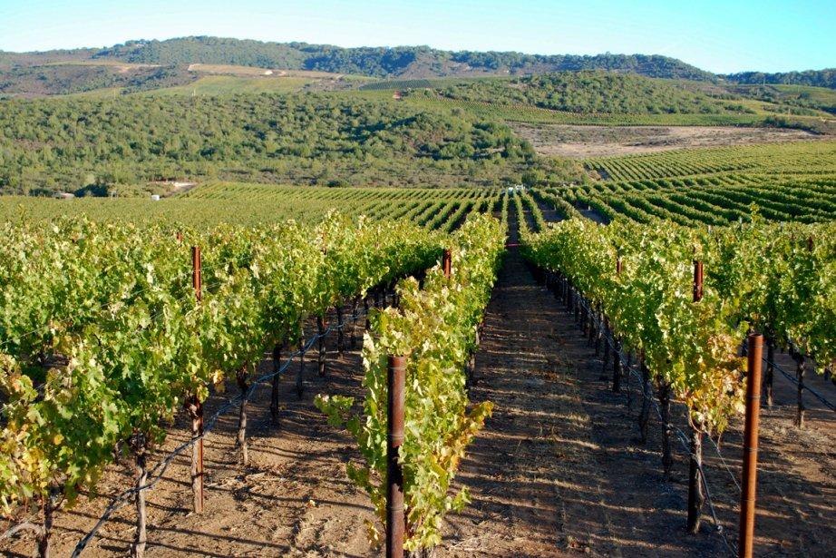 La célèbre vallée de Napa en Californie.... (Photo Bloomberg News)