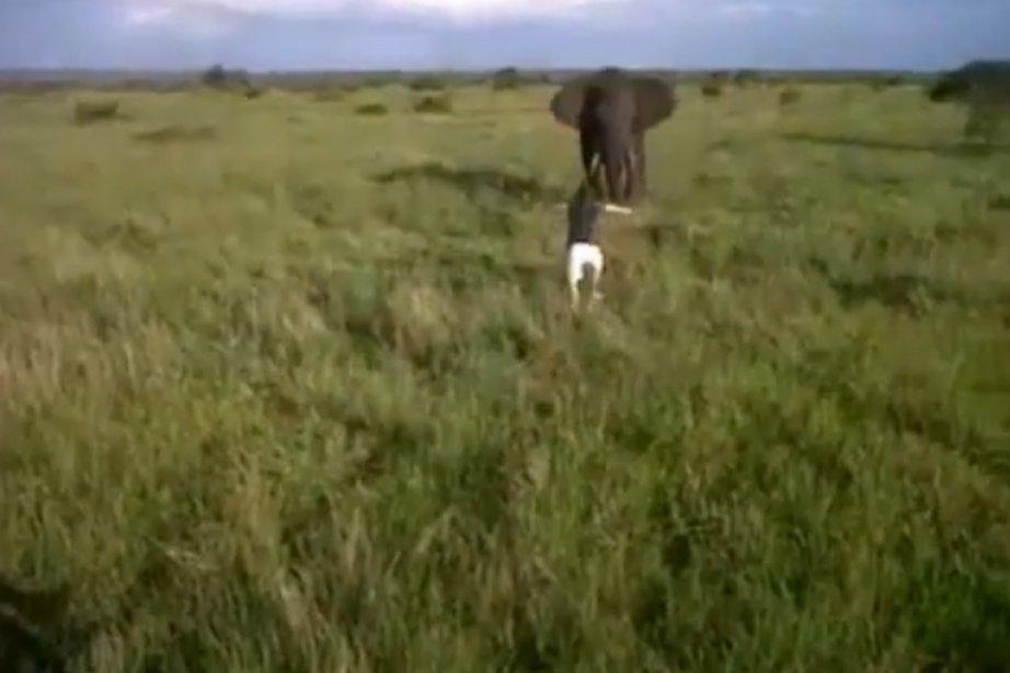 La vidéo montre un jeune homme visiblement éméché... (Image tirée de YouTube)