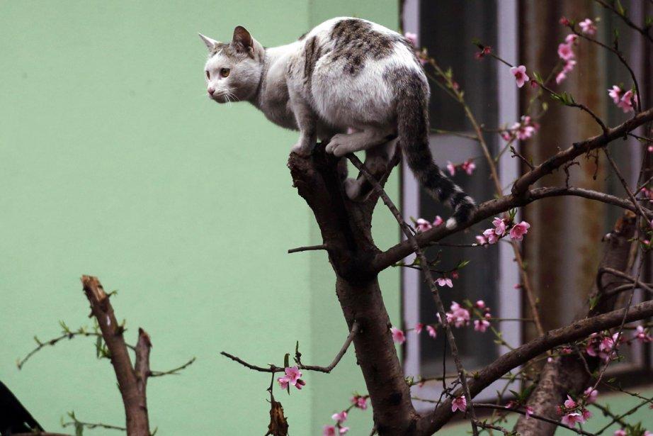 Un policier de New York tentant de sauver un chat... (Photo archives Reuters)