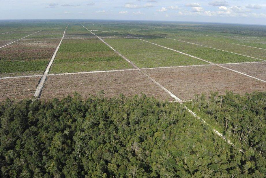 Selon les Nations unies, la déforestation représente 70%... (Photo Romeo Gacad, Agence France-Presse)