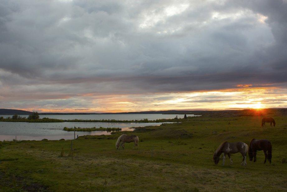 Des chevaux au bord du lac Mývatn. (PHOTO SYLVAIN SARRAZIN, LA PRESSE)