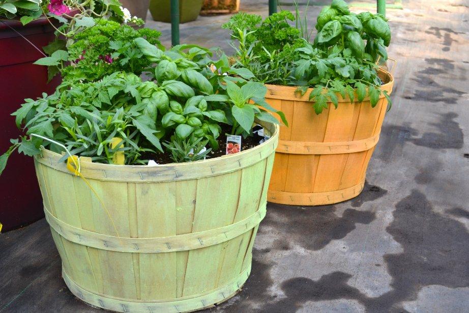 comment devenir un bon jardinier m 233 lissa bradette toit et moi