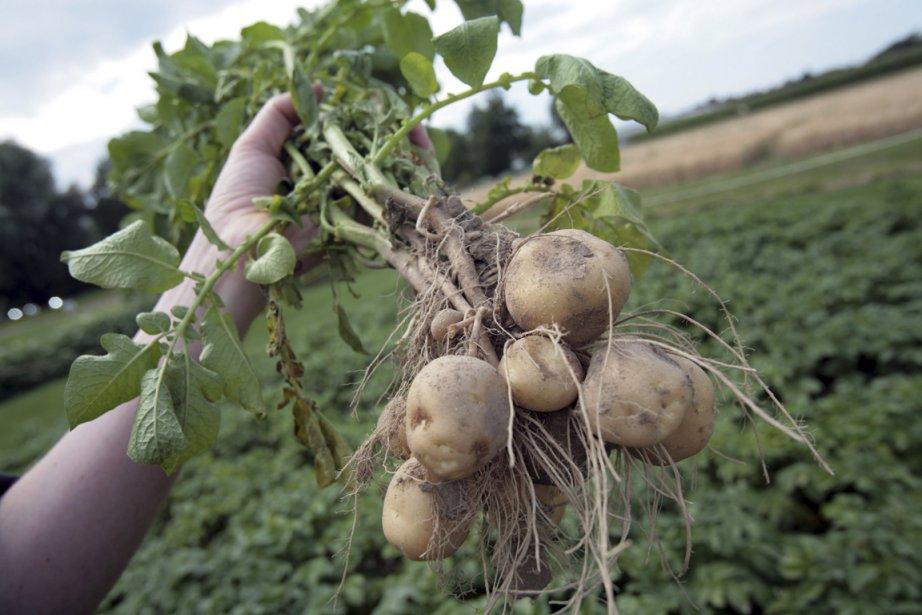 La majorité des puits à proximité de champs de pommes... (Photo d'archives NYT)
