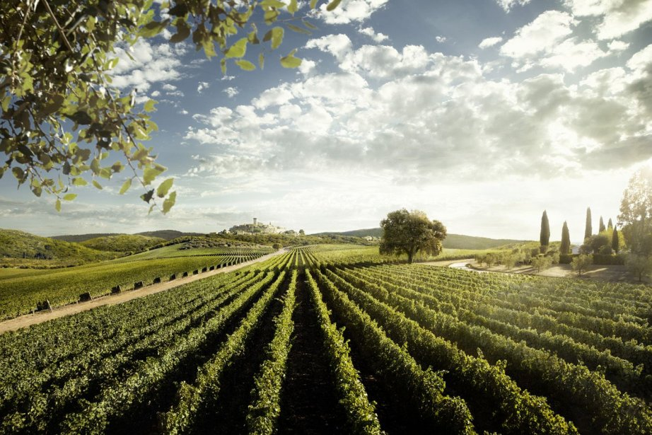 Un vignoble italien.... (Photo La Voix de l'Est)