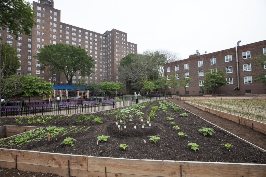 Ferme urbaine de Brooklyn, New York... (Photo par Leticia Barboza/NYCHA)