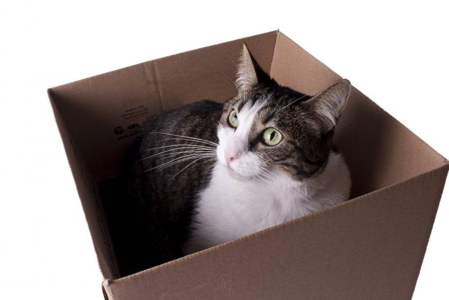 Pour le chat, territorial et routinier, le déménagement... (PHOTOTHÈQUE LA PRESSE)