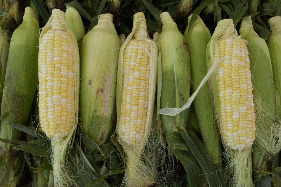 «Les projections de stocks de maïs de fin... (Photothèque Le Soleil)