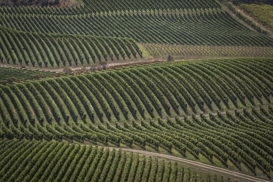 Vignoble Blue Montain. (PHOTO OLIVIER PONTBRIAND, LA PRESSE)