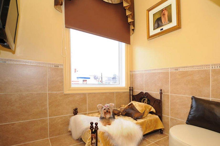 des h tels qui ont du chien st phanie vallet animaux. Black Bedroom Furniture Sets. Home Design Ideas