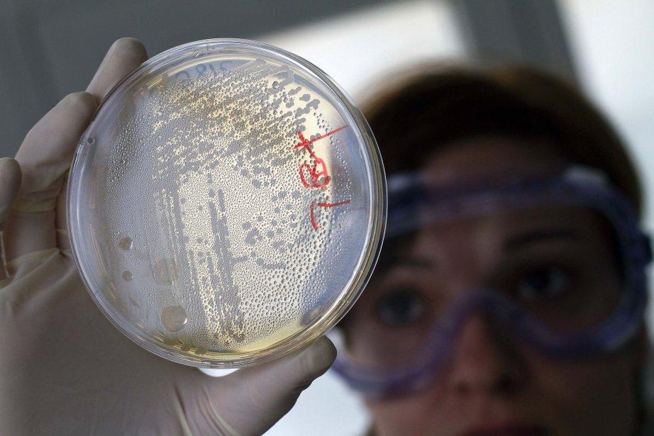 Les chercheurs ont trié 9000 cellules, à partir... (Photo Francisco Bonilla, Reuters)