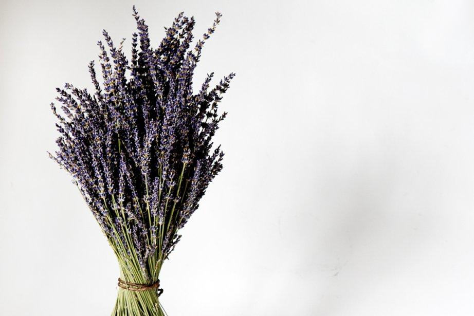 Véritable vedette florale, la lavande paie... (PHOTO MARCO CAMPANOZZI, LA PRESSE)
