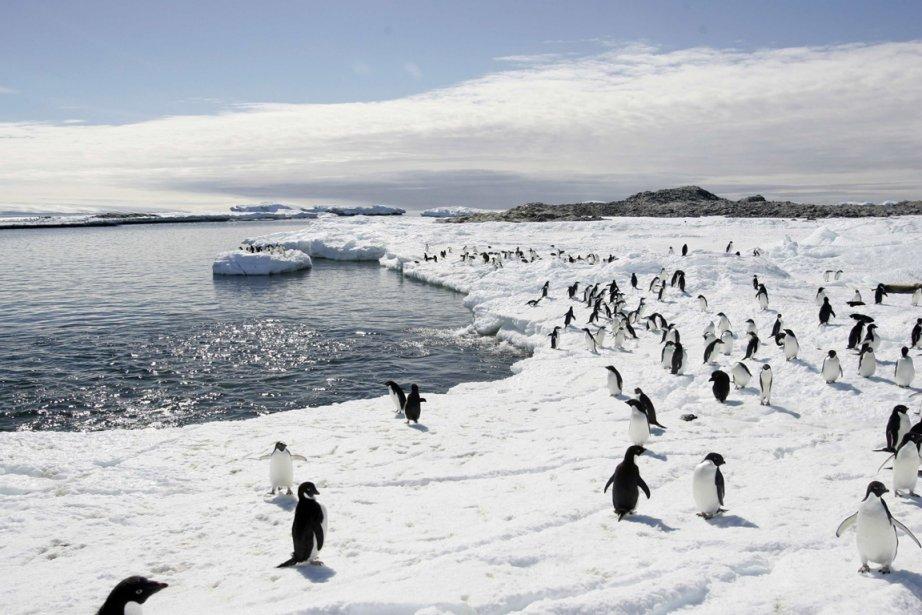 Les eaux de l'Océan austral autour de l'Antarctique... (PHOTO PAUKINE ASKIN,  ARCHIVES REUTERS)