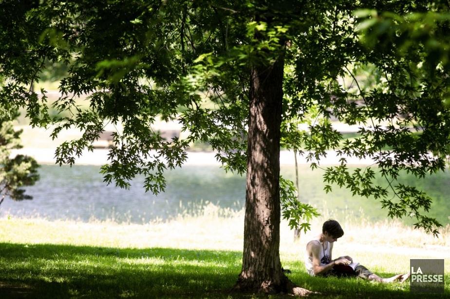 Lecture à l'ombre d'un arbre au Parc Lafontaine. | 17 juillet 2013