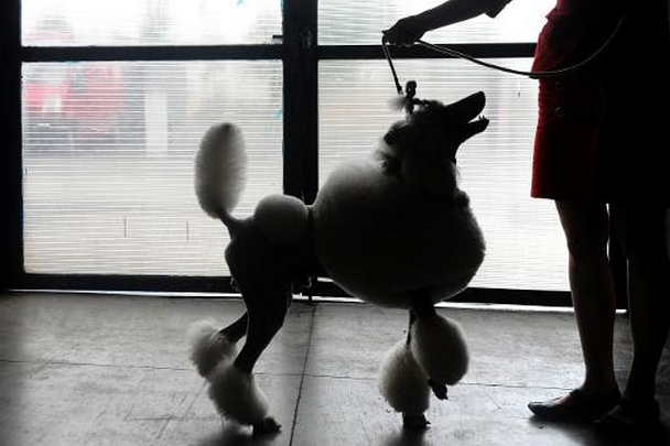 Les clients voyageant avec leur chien, moyennant un... (Photo AFP)