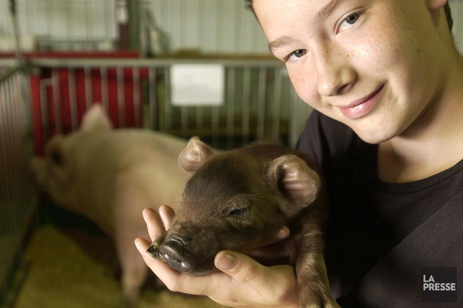Un jeune tient dans ses bras un cochonnet... (PHOTO BERNARD BRAULT, ARCHIVES LA PRESSE)