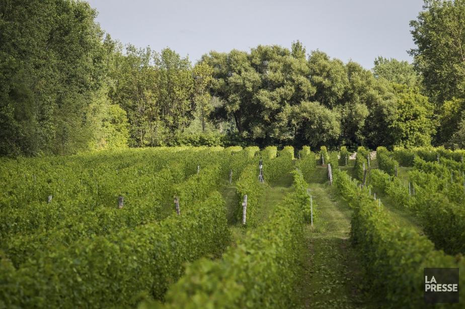 Depuis qu'il a acheté son vignoble à Saint-Jacques-le-Mineur... (PHOTO OLIVIER PONTBRIAND LA PRESSE)
