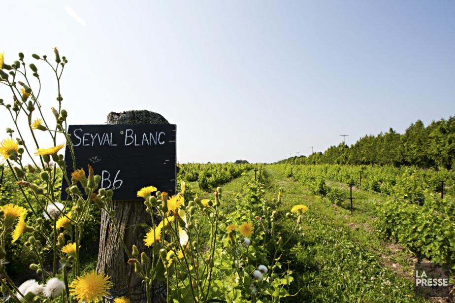Une balade sur la route des vins est rarement une activité familiale. Sauf au...