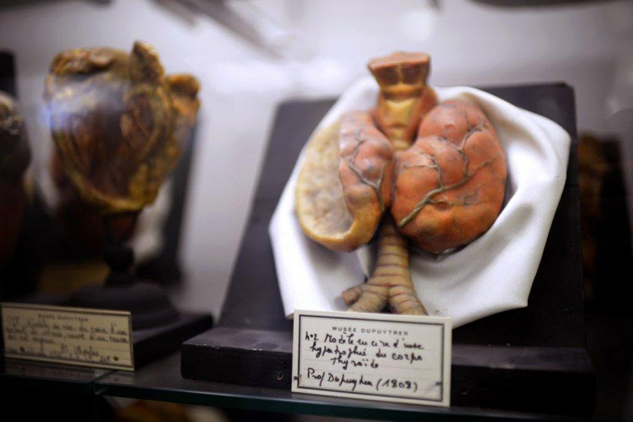 Les étudiants en médecine, mais aussi aux Beaux-Arts... (PHOTO MARTIN BUREAU, AFP)