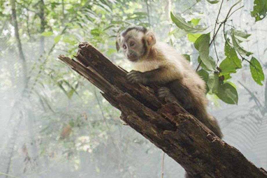 Dans Amazonia enfin, film de Thierry Ragobert, présenté... (PHOTO FOURNIE PAR LA PRODUCTION)