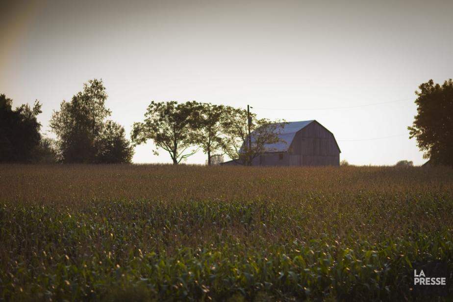 Plus de 1200 fermes ont disparu au Québec,... (Photo André Pichette, La Presse)