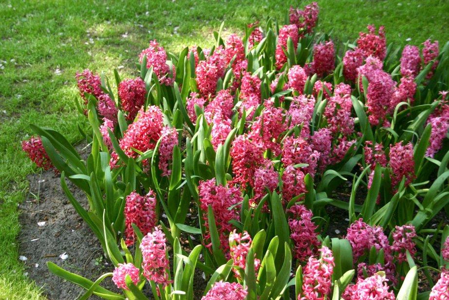 scenery spring pictures fleurs du printemps noms. Black Bedroom Furniture Sets. Home Design Ideas