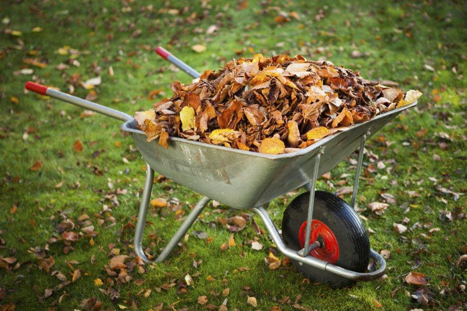 faut il ramasser les feuilles d 39 automne ou les laisser sur le sol carole thibaudeau cour. Black Bedroom Furniture Sets. Home Design Ideas