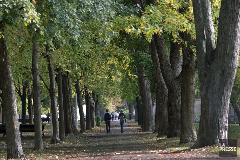 Le parc Lafontaine sur lePlateau Mont Royal.... (PHOTO Robert Skinner, La Presse)