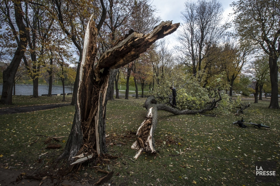 Un arbre cassé par le vent dans le... (Photo PHOTO OLIVIER PONTBRIAND LA PRESSE)