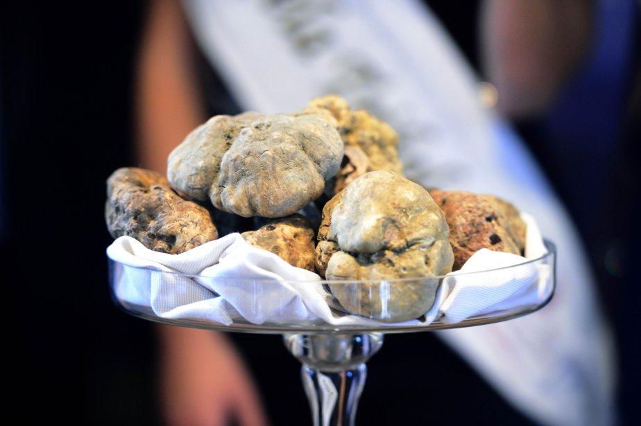 Les truffes blanches de haute qualité.... (Photo OLIVIER MORIN, AFP)