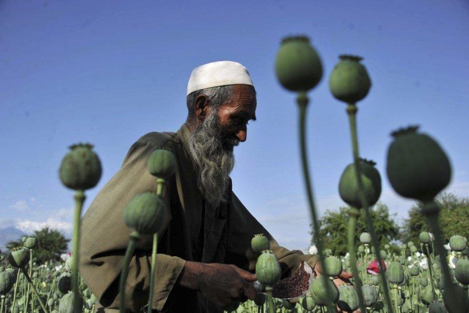 Un fermier afghan dans le district de Khogyani... (Photo archives AFP)