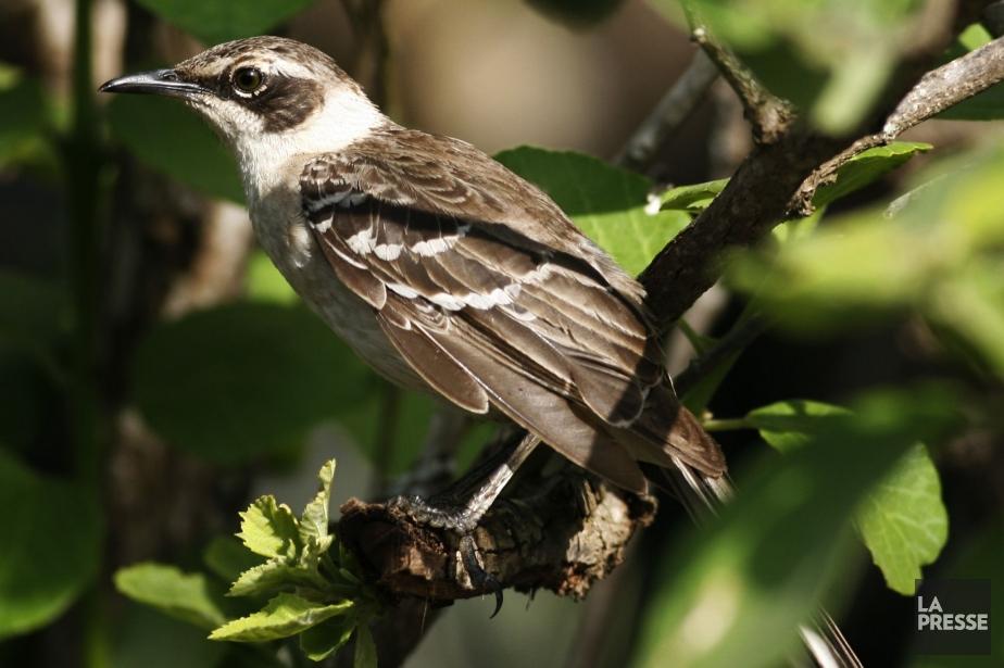 Un oiseau dans les Îles Galapagos.... (Photo Robert Skinner, Archives La Presse)
